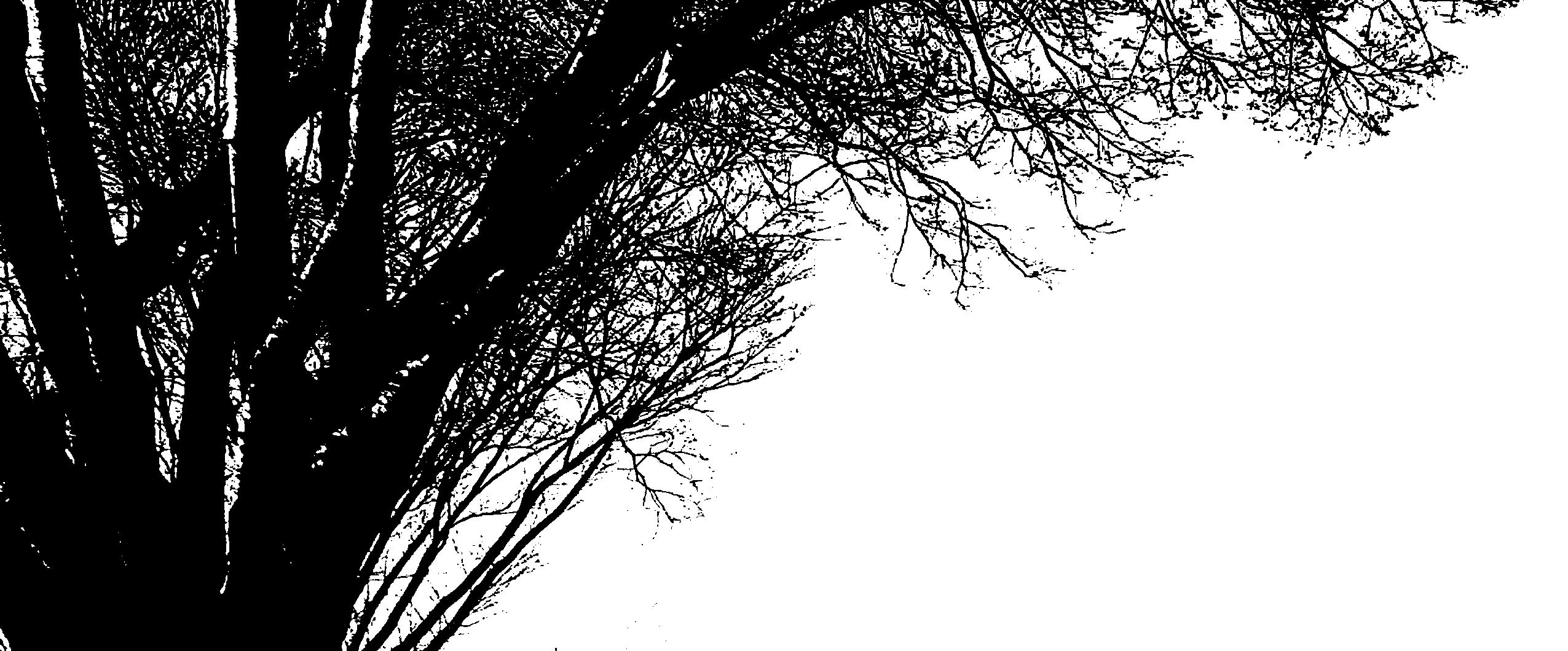 木のシルエット4 Tiff